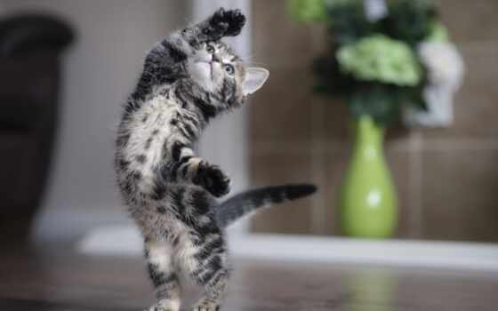 кот, animal, funny, котенок, cute, best, mobile