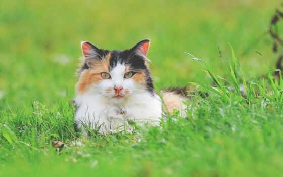 кот, sit, garden, трава, animal, pet, еда, white, black, браун