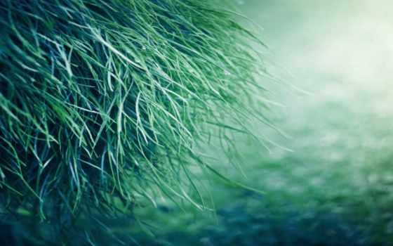 grass, pure