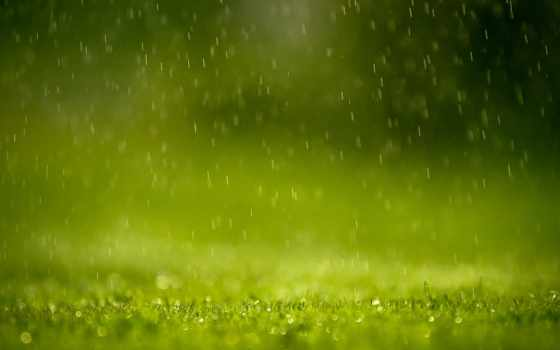 rain, spring, drops