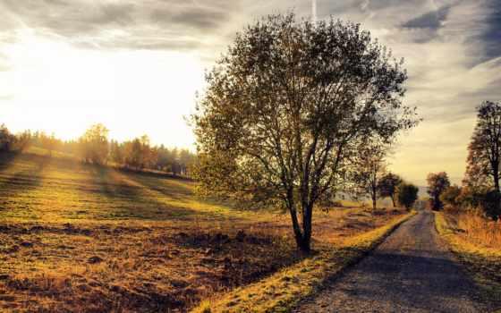 landscape, дерево, дорога