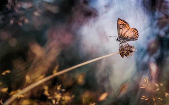 макро, растение, бабочка