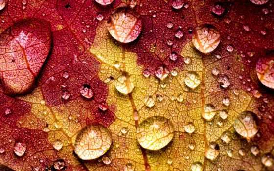 water, drops, осень