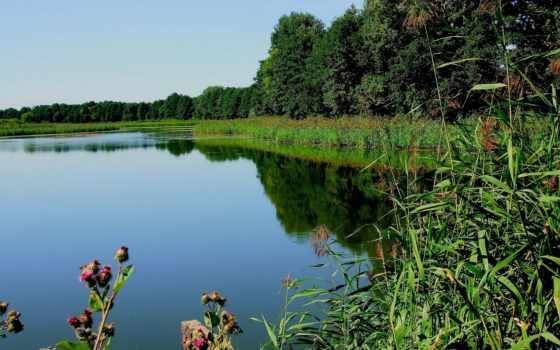 summer, природа, лес, картинка, категории, реке, озеро, красивые, летние, природы,