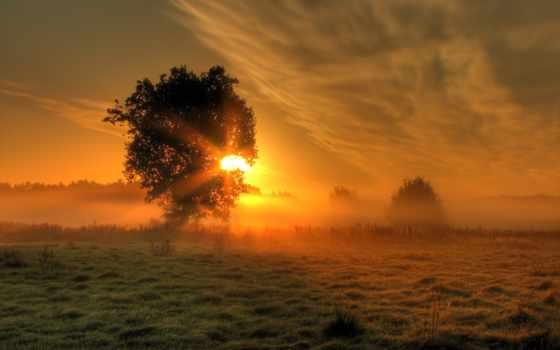 phaeleh, солнца, освещают, rays, тумане, sun, поле, утренние, comes, дерево,