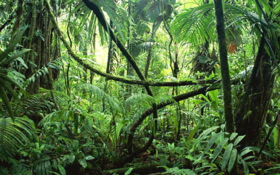амазонские, jungle, амазонки, journey, планеты, леса, amazon, одним, lord,