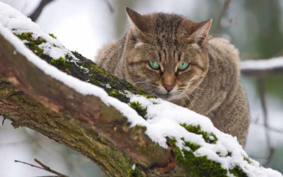 кот, зимы