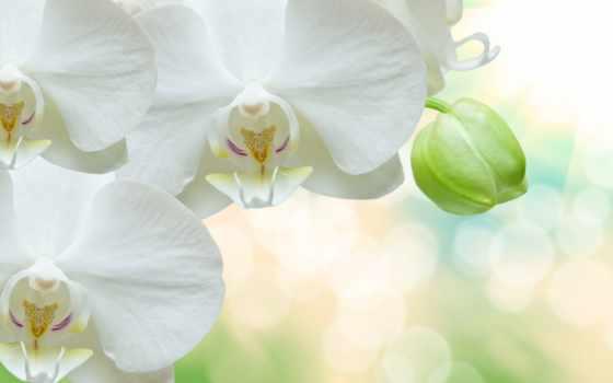 flowers, zoom, орхидея, pictures, images, parede, desktop,