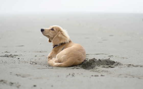 собака, zhivotnye, pinterest, статьи, smartphone, золотистый, mobile, телефон, clarke, месяца,