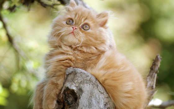 котенок, orange