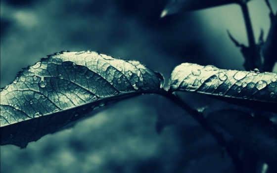 leaf, капли, листья