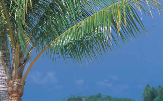 tropical, trees, palm