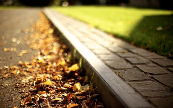 листва, осень, sun, макро, дорога, свет, природа, трава, газон,