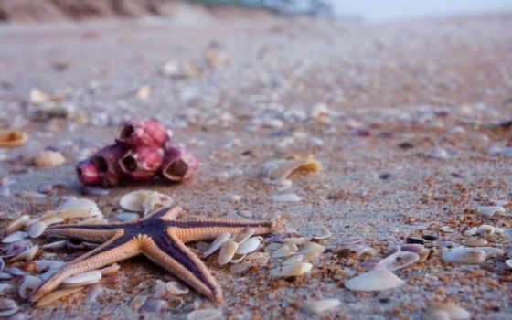 ракушки, star, морская, песок, пляж, свет, берег, красавица,