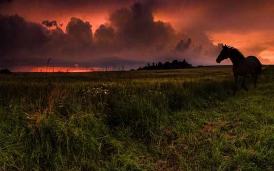 трава, закат, clouds, республика, небо, чехия,