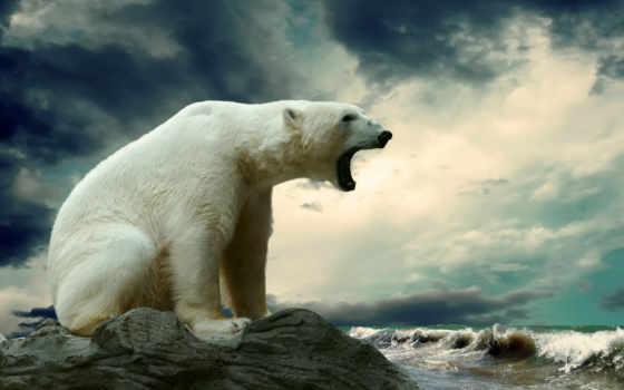 яndex, коллекциях, коллекцию, посмотрите, модульные, картины, медведь, ipad,