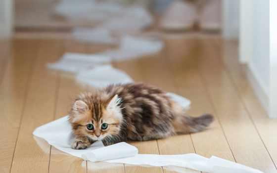 котенок, поднос, кот, little, live, stand, zhe, миро