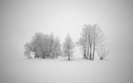 деревья, мороз