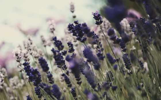 цветы, цветение, природа