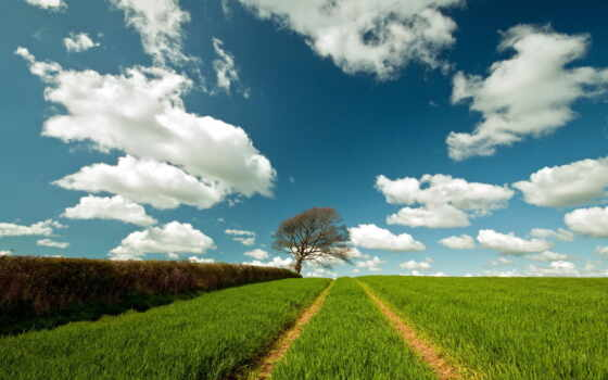 summer, landscape, поле