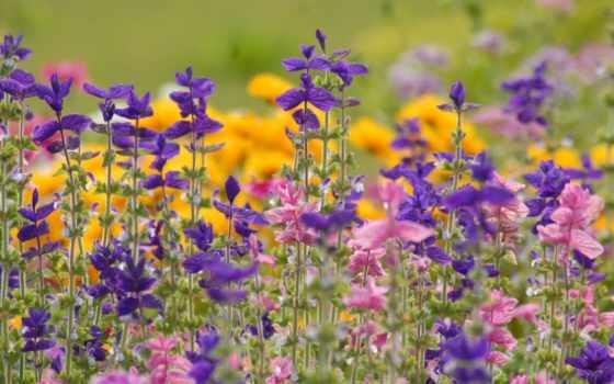 полевые, цветы, нашего
