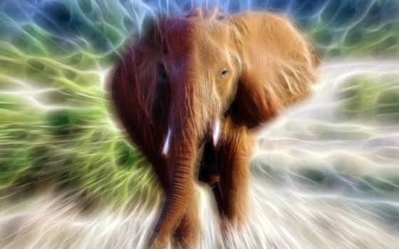 art, fractal, слон