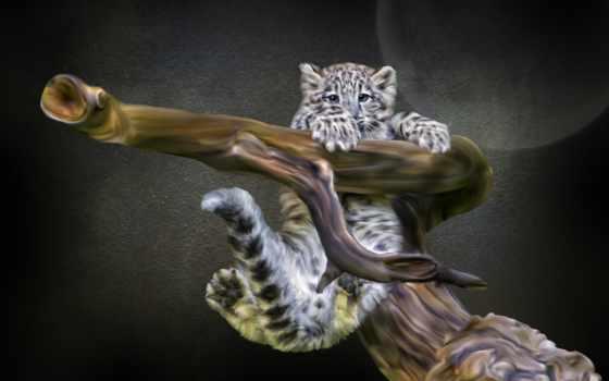 снег, ирбис, леопард