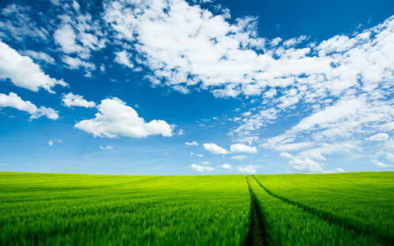 summer, природа, landscape Фон № 121642 разрешение 2560x1600
