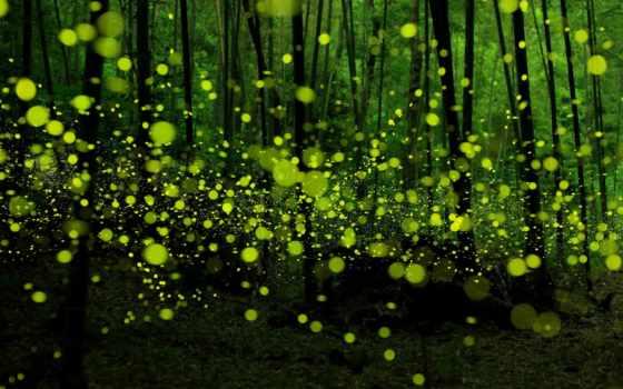 япония, лес, нагоя, fireflies, город, this, magical, forests, фотограф, июнь,