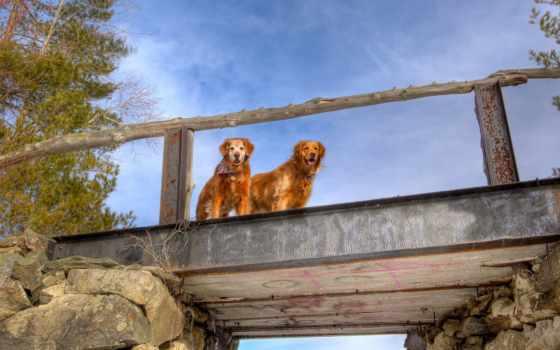 небо, мост, монитора, собаки, fate, pair,