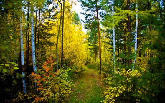 лес, осень, природа, trail, высоком,