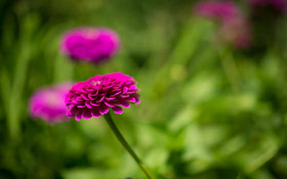bokeh, fonts, flowers, природа, petals, великолепие,