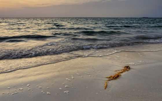 вечер, peaceful, море, waves, algae, природа,
