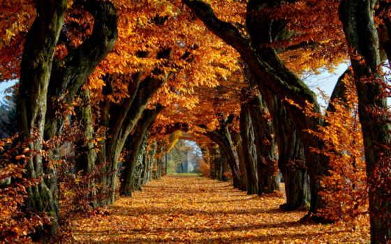 осенние, осень, аллея, осеннем, парке, тихая, liveinternet,