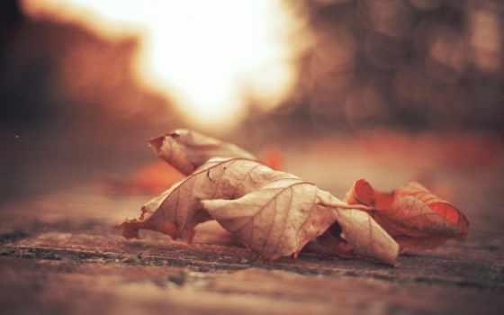 листва, осень, сухие, макро, лист, maple, капли, роса,