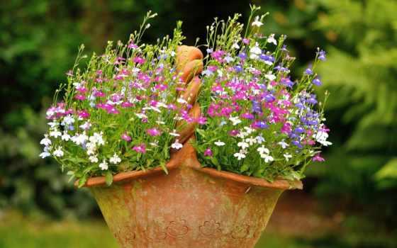 cvety, корзина, flowerpot, цветами, полевыми, цветов, лобелии, клумба, корзине,