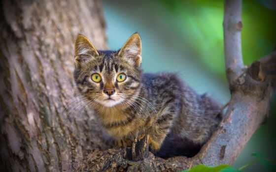 кот, id, pet, шляпа, котенок, дерево, котенок, дерево, vzglyad, cute, мордочка
