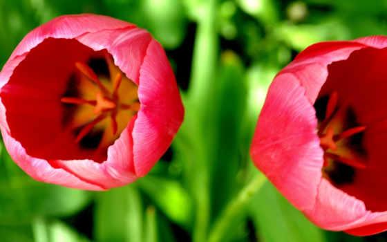 цветы, макро Фон № 20009 разрешение 1920x1080