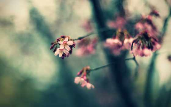 spring, pink