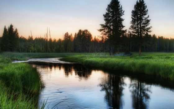 природа, речка, зелень, россия, утро, деревья, лес, трава, картинка,