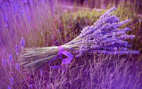 цветы, lavender, букет