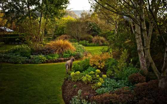 garden, australian, gardens, картинка, трава, природа, wychwood,