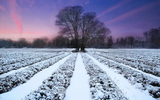 hiver, fond, ecran, fonds, lavande, чемпион, природа, neige, soleil, paysage,