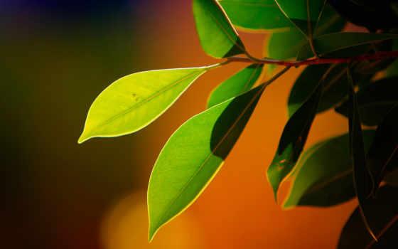 природа, guitars, branch, листва, high, desktop, youtube, нояб,