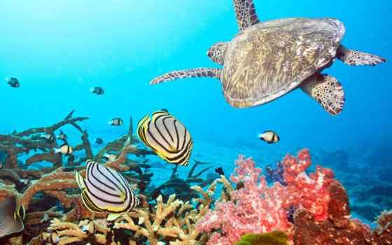 очарование, египетский, sheikh, эль, resort, туры, ёль, отдых, coral,