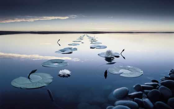 вечер, water, кувшинки, спокойствие, цветы, отражение, река, листва, камни, лес, oblaka,