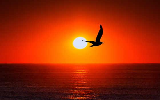 ipad, море, небо, силуэт, птица, sun, pixabay,