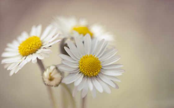ромашки, cvety, наташки, открытки, ромашка, everything, днем, моей, поздравления, рождения, тебя,