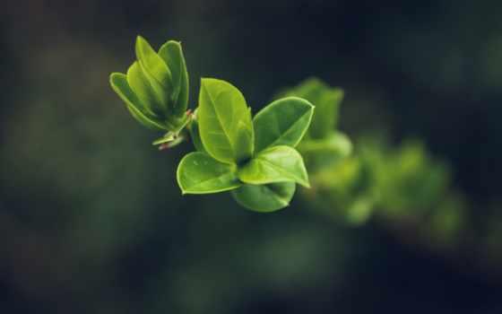 ,, лист, зеленый, завод, цветок, весна, ветка, plant stem, цветковое растение, бутон, растительность