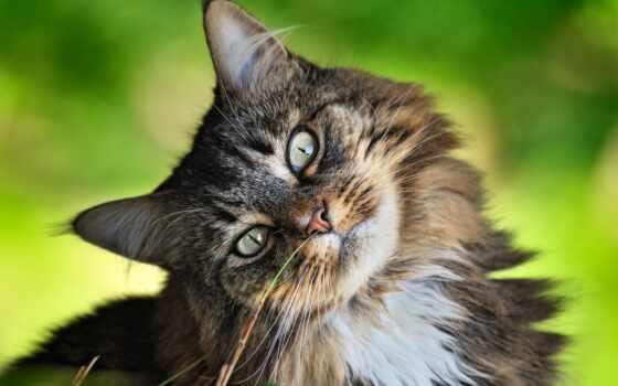 animal, summer, коты, cover, кот, хороший, лет, цветы, собака, природа, product